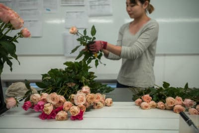 Behind the scenes - Video for Wabara roses